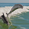 Play pair of dolphins