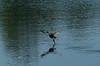 Ballerina Duck
