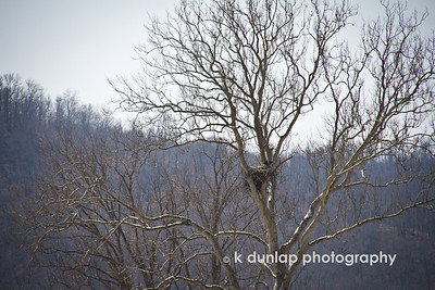 04.06.13 = Uncropped eagles nest photo.