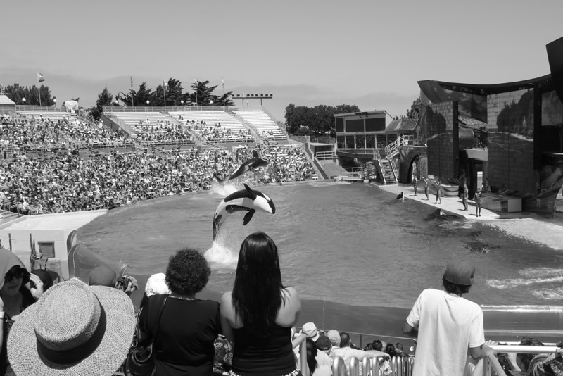 sea world whale show