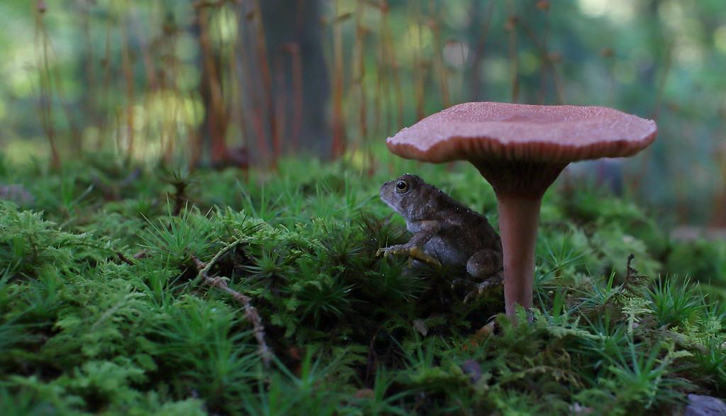 IMAGE: https://photos.smugmug.com/Animals/Wildlife/i-Z2SmxQ4/0/8c97bbbb/XL/IMG_1423-XL.jpg