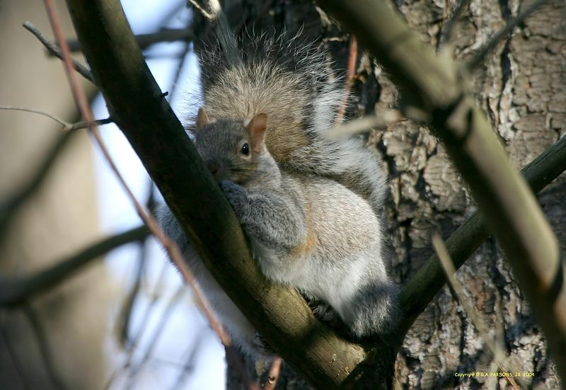 Squirrel taking a nap - Michigan by Paw Prints Nature & Wildlife Photography