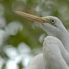 Soft Egret