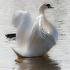 Swan stretch post CS4