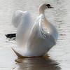 Swan stretch post CS4