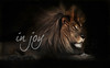 Lion from the Shambala Big Cat Sanctuary in California