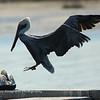 Pelican landing, HHI, SC