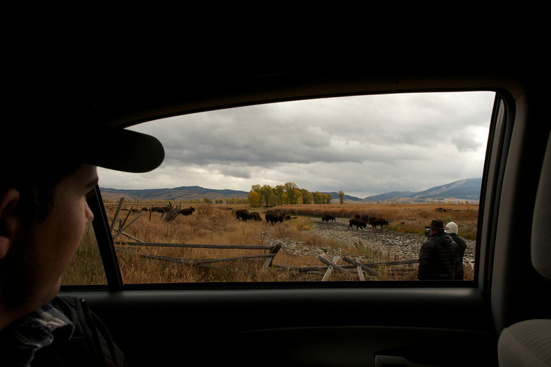 Viewing wildlife Americana style---from the car!