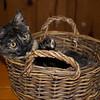 My kitten (11-12 weeks old) found my mail basket.