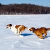 -14F, a little sunshine, and a frozen lake. Couldn't ask for a better day for a walk and fun!