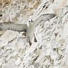 White Cliffs of Dover 18-04-15  0036