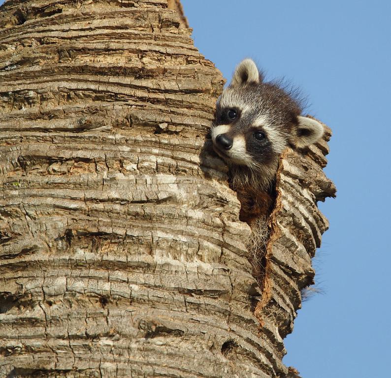 IMAGE: http://www.mikeswildlife.com/Animals/Wildlife/i-n6pmrPG/0/XL/1895-XL.jpg
