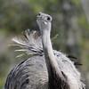 Emu Attitude