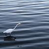Heron at Meritt Lake