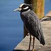 On Fisherman's Wharf in Punta Gorda, Florida.