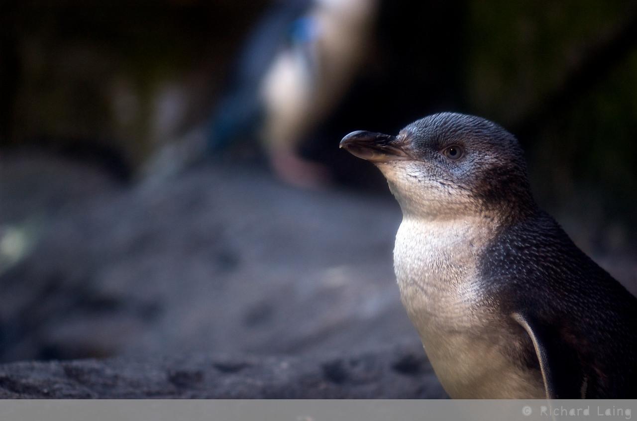 AntarcticCentre_2010-07-15_13-52-10_DSC_4341_©RichardLaing(2010)