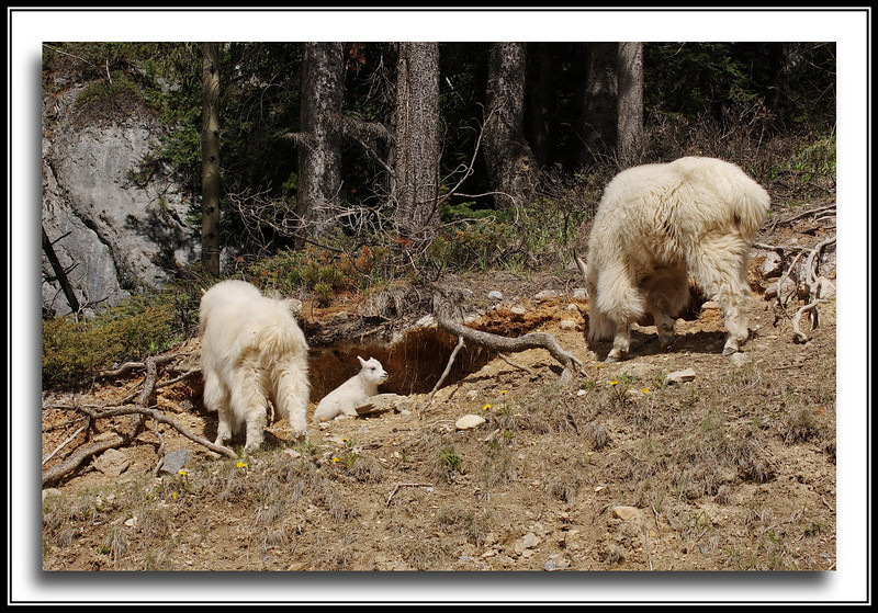 Family group at the mineral lick.