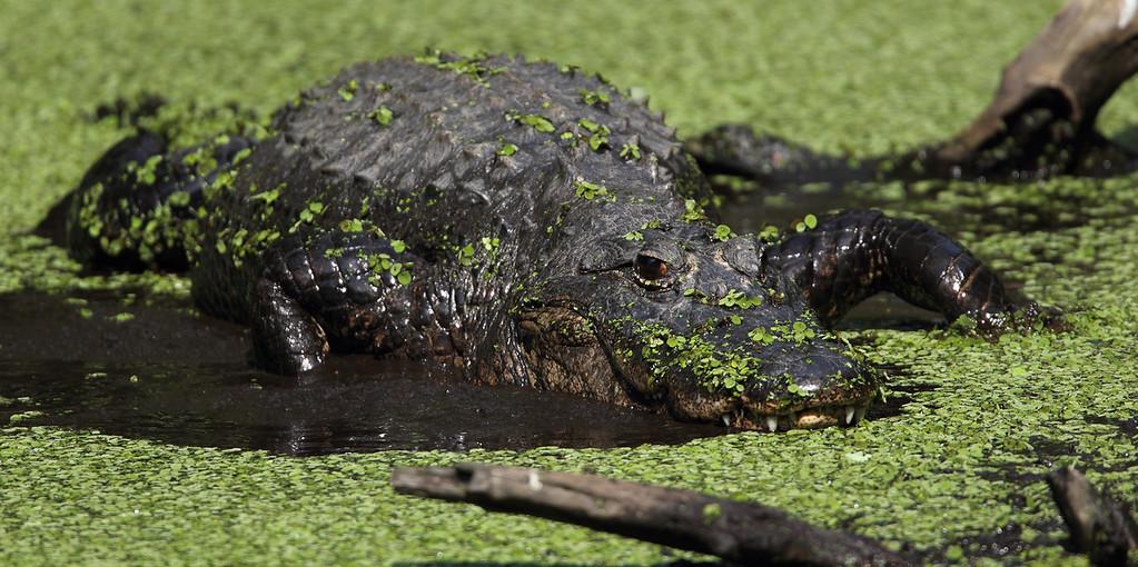 IMAGE: http://www.mikeswildlife.com/Animals/Wildlife/i-rKtRw2Z/0/XL/1039-XL.jpg