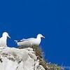 White Cliffs of Dover 18-04-15  0030