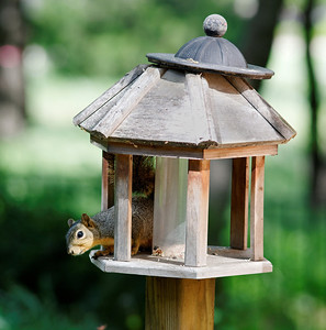What Part of BIRD Feeder are You Not Getting?