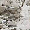 White Cliffs of Dover 18-04-15  0024