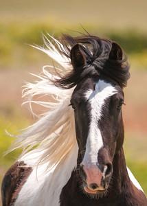 Galloping Mustang