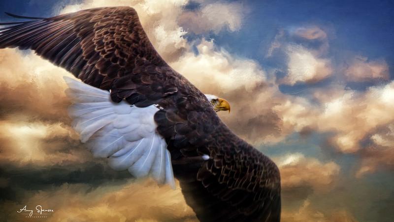 Painted Sky Eagle