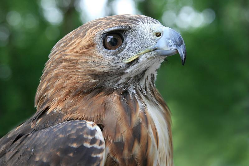 The eye of a hawk.