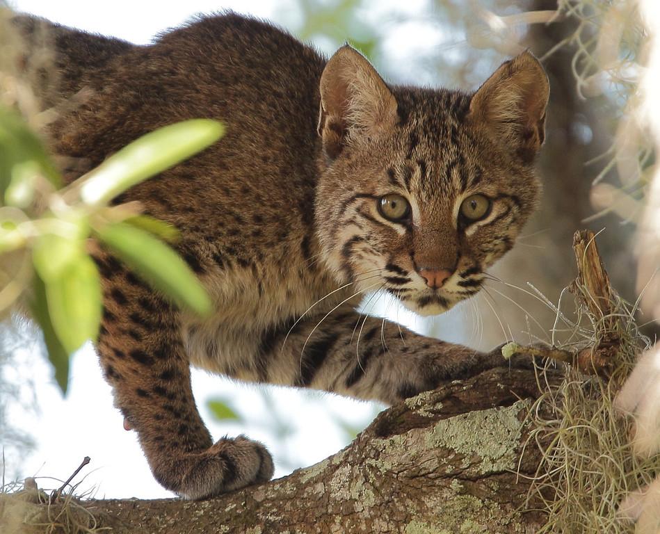 IMAGE: http://www.mikeswildlife.com/Animals/Wildlife/i-zCKQ6Hs/0/XL/2079-2-XL.jpg