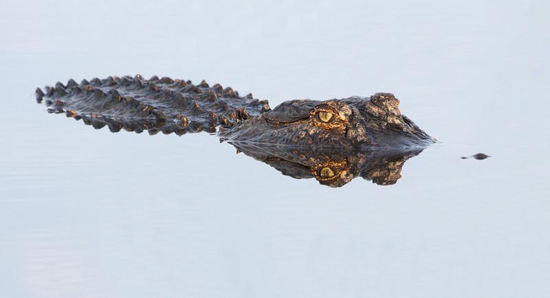 IMAGE: https://photos.smugmug.com/Animals/Wildlife/i-zXdfb6T/0/9ff1cbd2/L/IMG_8772-2-L.jpg