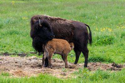 5-24-2016 Kimball Buffalo 156 SM