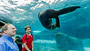 Posing for the crowd under the Sea Lion Sound at the St. Louis Zoo.<br /> <br /> © Copyright Philip Leara - Creative Commons - Attribution-NonCommercial-ShareAlike (CC BY-NC-SA 3.0)