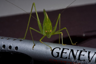 Grashopper-21