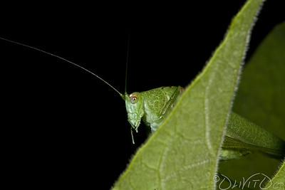 Grashopper-31