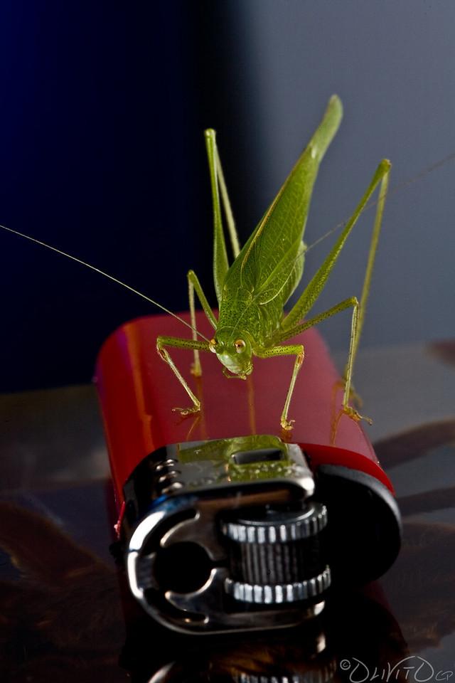 Grashopper-19