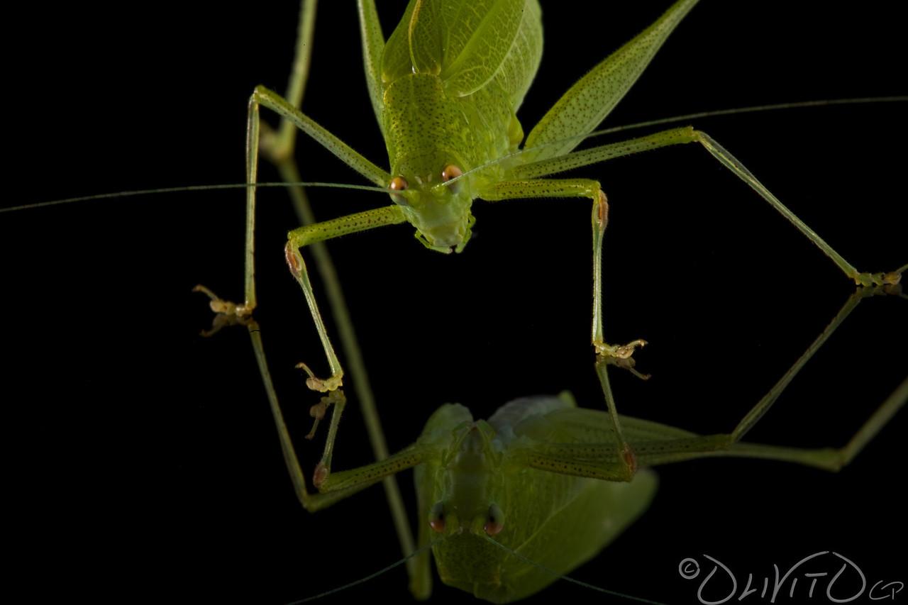 Grashopper-24