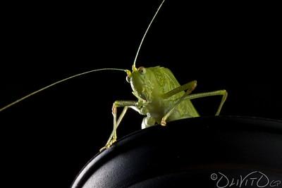 Grashopper-22