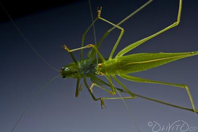 Grashopper-23