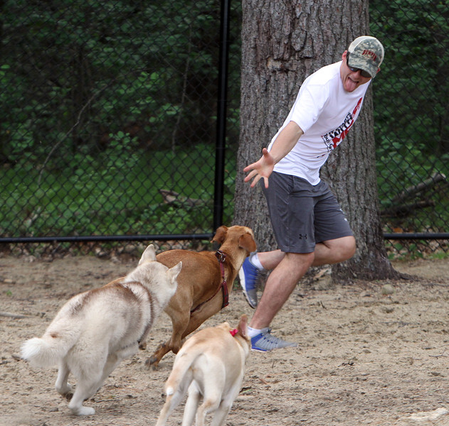 Troy Thibodeau of Wilmington plays with his rescue dog, Ava, a Lab mix, top, as well as O'Malley, a husky belonging to Ryan Paquette of Billerica, and Stella, a mix belonging to Sheena Kierstead of Wilmington, at Wilmington Dog Park. (SUN/Julia Malakie)