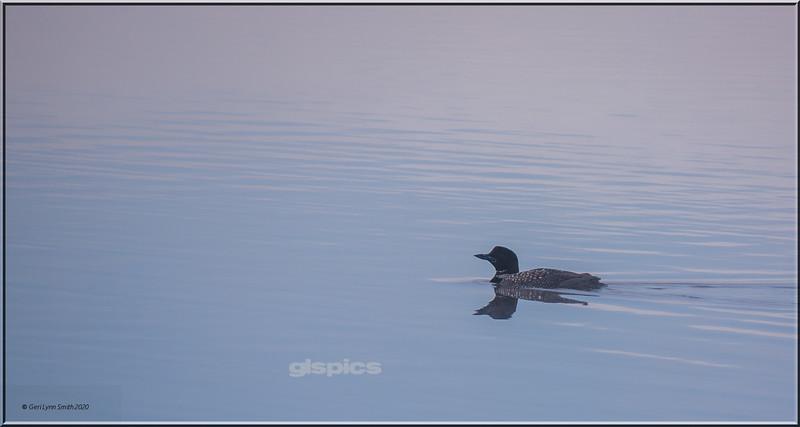 Morning Loon on Madawaska Lake