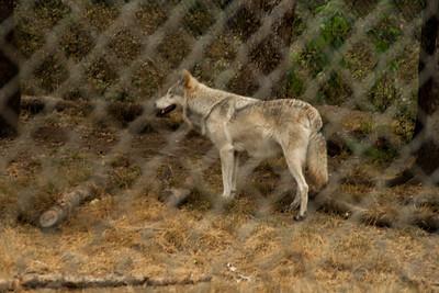 Wolf Haven 09-21-2012-23
