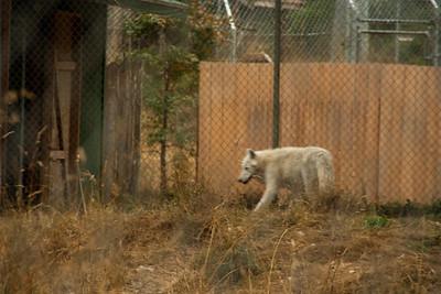 Wolf Haven 09-21-2012-4