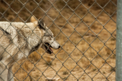 Wolf Haven 09-21-2012-22