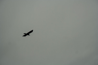 Wolf Haven 09-21-2012-10
