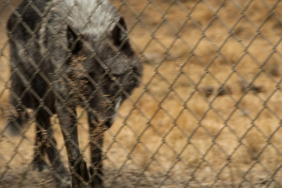 Wolf Haven 09-21-2012-26