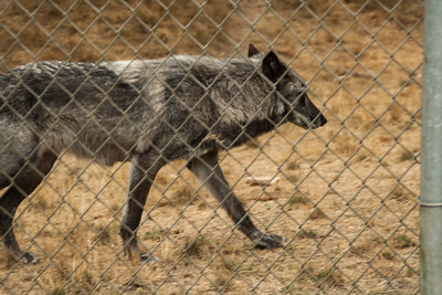 Wolf Haven 09-21-2012-20