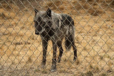 Wolf Haven 09-21-2012-18