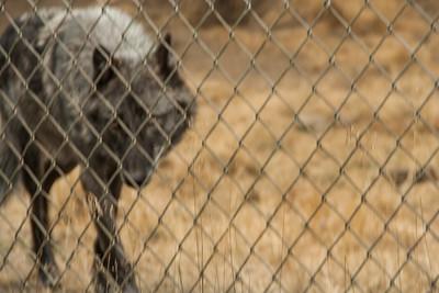 Wolf Haven 09-21-2012-25
