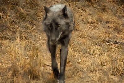 Wolf Haven 09-21-2012-15