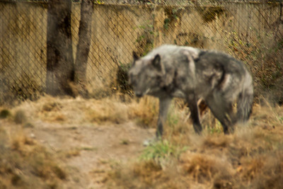 Wolf Haven 09-21-2012-14